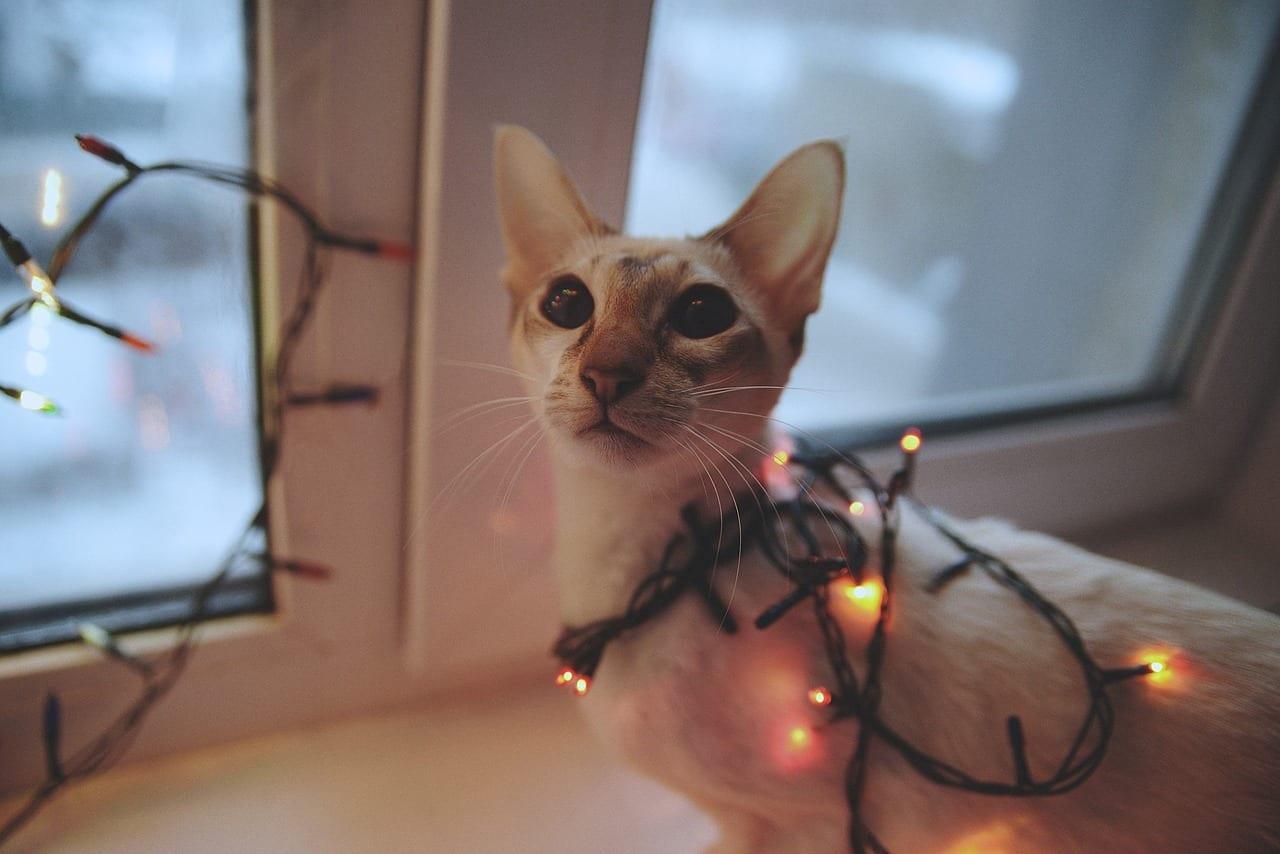Botti Capodanno cani e gatti
